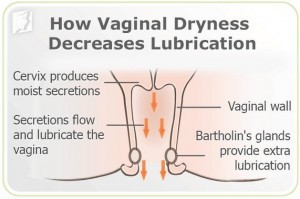 vaginale droogheid - uitleg over bevochtiging vagina