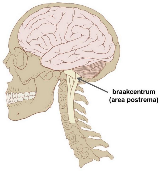 deel van de hersenen waar overgeven wordt geregeld (braakcentrum, area postrema)