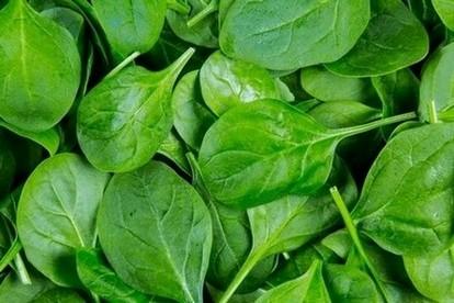 magnesiumtekort - spinazie bevat veel magnesium