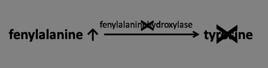 fenylketonurie - ophoping van fenylalanine door ontbreken fenylalaninehydroxylase
