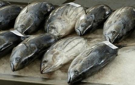 histaminevergiftiging kan worden veoorzaakt door het eten van tonijn die niet goed gekoeld is