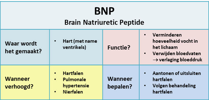 brain natriuretic peptide (BNP) - samenvatting