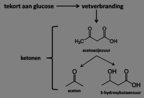 bij ketose worden ketonen gevormd door vetverbranding